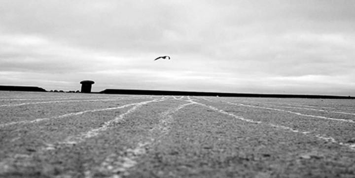 Eine Möwe fliegt über ein Feld